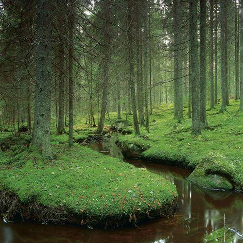bluepueblo: River Forest, Västmanland, Sweden photo via sherri #legends