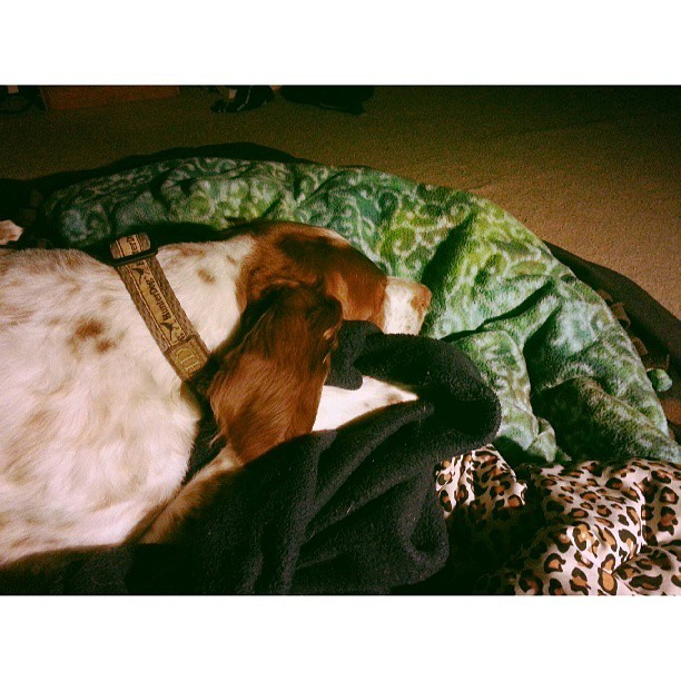 concrete-punk:  The best cuddle buddy I could ever have ♡ #brittany