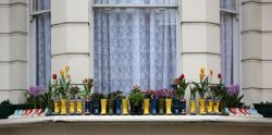 sreed99342:  Windowsill in Maida Vale, London