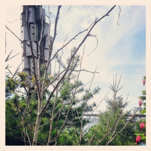 Seen around town: Bird houses and trees on False Creek's Habitat Island
