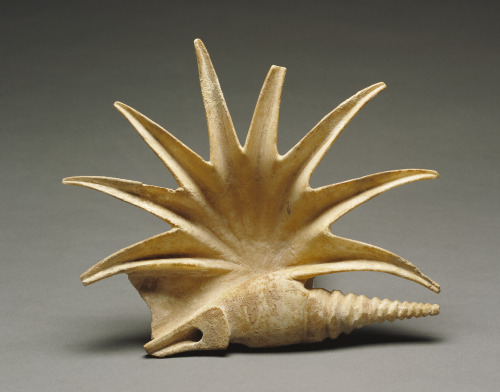theantidote:  This is a 2400 year old marble Pelican's Foot. Yep. Sculpted in marble. Of a Mediterranean shell called Pelican's Foot. This 9 inch wide and highly detailed reproduction of a shell is a mirrored and much larger version of an actual specimen found on the Grecian coast. This particular sculpture has been hollowed out for libations for religious worship.  Offering vessel in the shape of a seashell, about 425 B.C., Greek, Marble, J. Paul Getty Museum. (via thegetty:)
