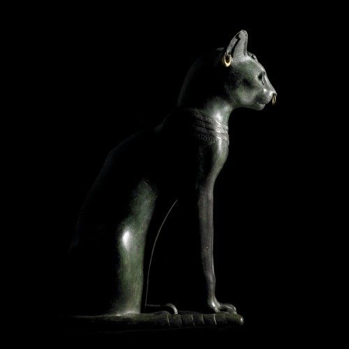 ancientpeoples:  Bronze figure of a seated cat From Saqqara, EgyptLate Period, after 600 BC The domesticated cat is probably associated more with ancient Egypt than any other culture in the world. This cat is a particularly fine example of the many statues of cats from ancient Egypt. It has gold rings, a silvered collar round its neck and a silver protective wedjat eye amulet. The cat is mostly identified with the goddess Bastet, whose cult centre was at Bubastis in the Nile Delta. Bubastis became particularly important when its rulers became the kings of Egypt, forming the Twenty-second Dynasty, sometimes known as the 'Libyan Dynasty'. The rise of the importance of Bastet and the cat can probably be dated to this period. As with other creatures sacred to particular deities, it became very popular in the Late Period (661-332 BC) to bury mummies of cats in special cemeteries as a sign of devotion to the goddess. A number of cat cemeteries are known from Egypt. See, for example, a cat mummy dating to the first century AD from Abydos. This sculpture is now known as the Gayer-Anderson cat, after its donor to The British Museum. (Source: The British Museum)