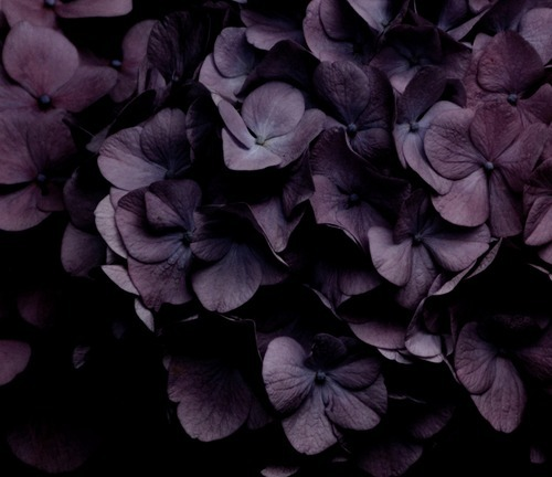 scarletlipscrimsonfingertips:  Moody deep purple flowers. So beautiful!