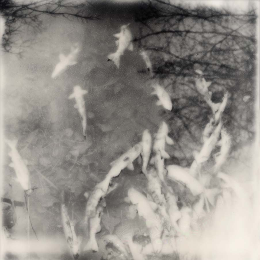 Ian Ruhter/ Impossible Film  /Polaroid /Life /Lake Tahoe Ca, 12.09.2012