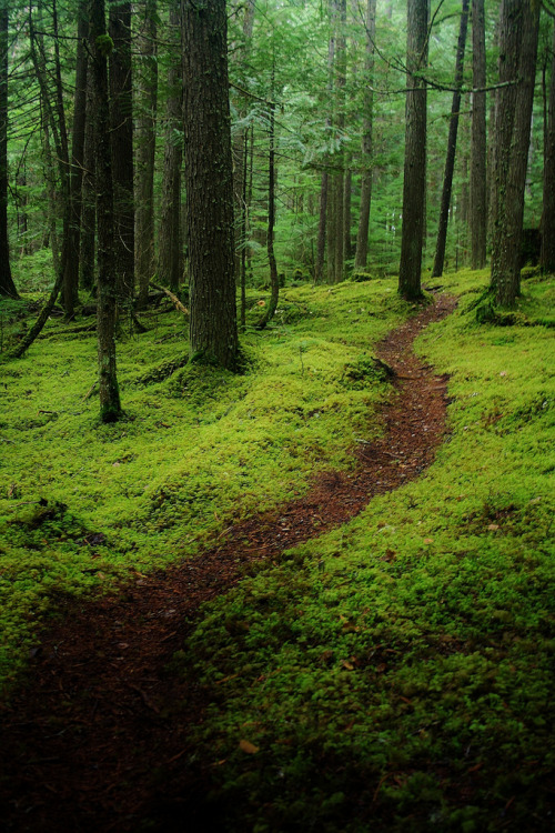 disminucion:  The Green Carpet Of The Forest