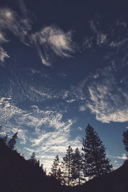 love photography sky hipster trees indie Grunge nature