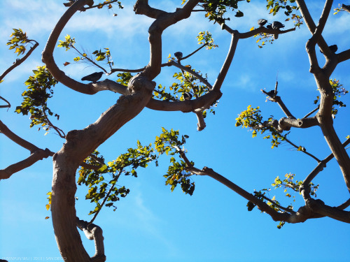 Branches in January San Diego. #photography #SanDiego #bluesky