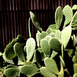 che vita del..#cactus #plant #plants #green #leaf #leafs #nature #bloom #natural #petals #stem #color #colour #garden #beautiful #pretty #beauty #colours