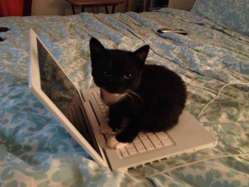 getoutoftherecat:  kittens don't belong on keyb… oh fine. since you looked at me like that.