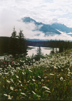 4nimalparty:  Banff, 2011 (by Erich DeLeeuw)