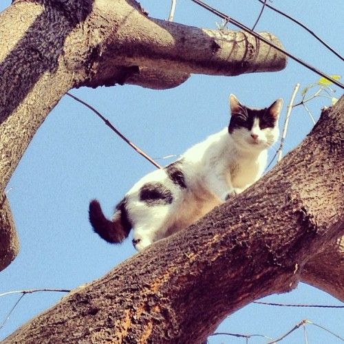 #cat #tree #instanature #nature #sky #mexico #mextagram #instamex #love #instagood #me #tbt #cute #photooftheday #instamood #beautiful #picoftheday #igers #girl #instadaily #iphonesia #follow #tweegram #happy #summer #instagramhub #cartayen #followback
