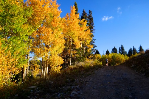 Running into autumnal bliss in the Bear River Mountains during the 2014 Bear 100.Photo: Bryon Powell