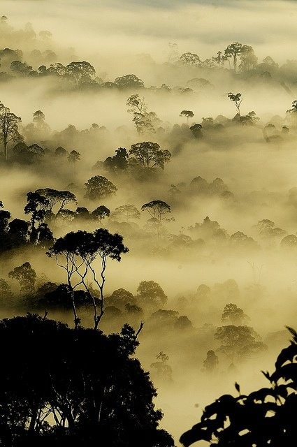jada111:  Rain Forest in Borneo.. | Most Beautiful Pages | Savvy Places