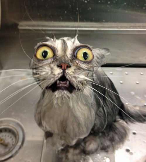 tastefullyoffensive:  'You have betrayed me, human.'[via]