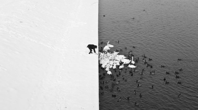 Striking Black & White Photo of a Man Feeding Birds in Krakow