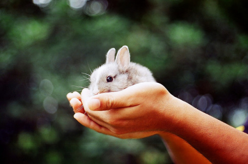 pl-eiades:  Minimalist rabbit by qawi halim on Flickr.