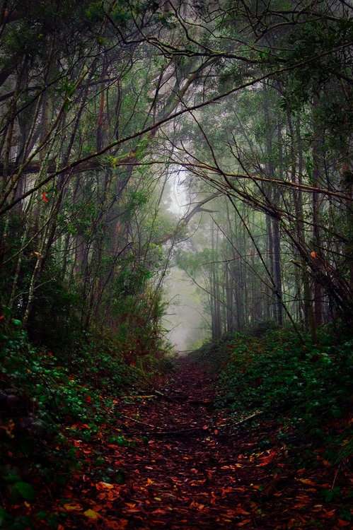 Dark Forest, Australia photo via willow