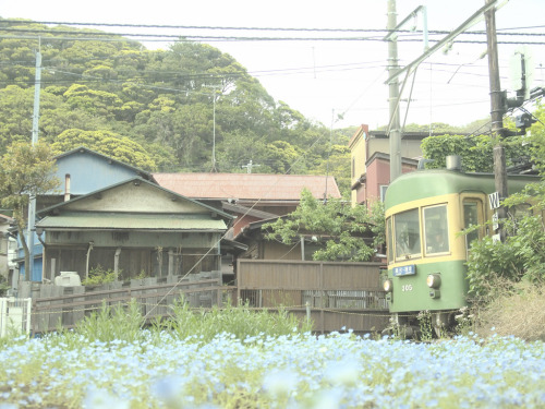 Train on the Japanese island of Enoshima (by nicenature)