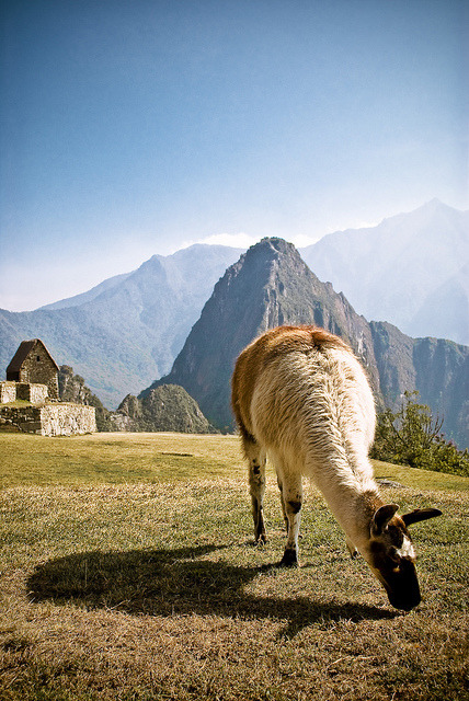x-enial:  Inhabitant of Machu Picchu by Lorenzo
