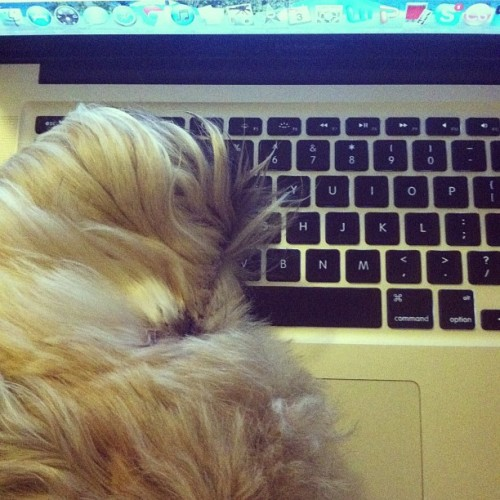 Fin has clearly learned how exhausting it is to be a writer.