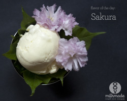 milkmadeicecream:  milkmade flavor of the day: Sakura (aka Cherry Blossom Ice Cream)cherry blossom ice cream served over the cherry blossom leavesSpring sprung this weekend in New York and it sure was gorgeous. We were able to pay a trip out to the Brooklyn Botanical Garden for the annual Cherry Blossom Festival. After a little hanami - the act of enjoying the beauty of cherry blossom flowers - at the park, we snagged some felled blossoms, took them home, and turned them into ice cream. Of course we did! See, in Japan the flowers and leaves of the cherry blossom tree are preserved and eaten — either salted and pickled, or used in tea, or wrapped around mochi to make sakuramochi or other candies. Now, we present, Sakura Ice Cream. How does it taste, you ask? It's smooth, milky, delicious, and oddly enough, tastes a bit like coconut.
