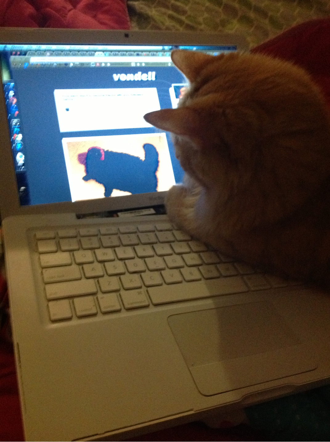 my cat won't move and he's just laying on my laptop looking at vondell's blog and purring loudly help