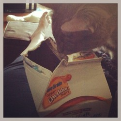 Jelly is obsessed with goldfish.