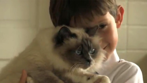 Cat helps boy express his emotions     Lorcan Dillon is overcoming selective mutism and learning to share his feelings with the help of a Birman named Jessi-Cat.