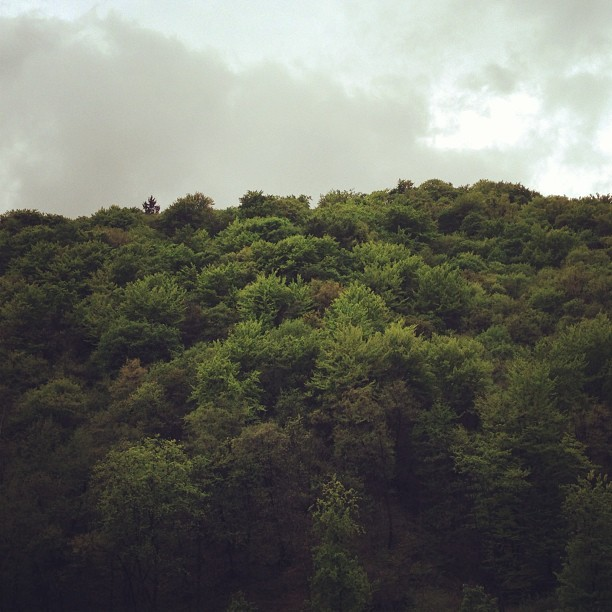 Forest 🌲 ::: #forest #woods #outside #saturday #green #skyporn #sky #clouds #cloudy #crostagram #trees #old #nature #eco #bio #plants #picoftheday #photooftheday #frame #world #europe #thick #dense #air #exterior #eu #spirit #light 🌲
