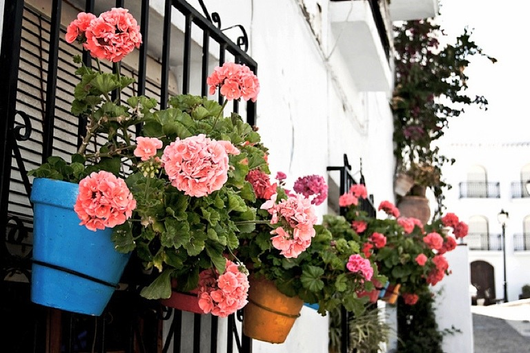 | ♕ |  Pink geraniums - Frigiliana, Spain  | by © James
