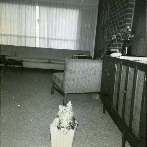 velvet-tangerine submitted this!  Kitten in a box. Flea market found photo!
