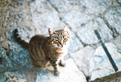 Cat. Kitty. Meow. (Canon AE-1)