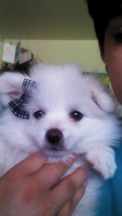 I got a pompom puppy. Her name is Daisy and she's quite a cutie.