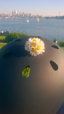 Daisies for my bike helmet at Gasworks Park 🚲