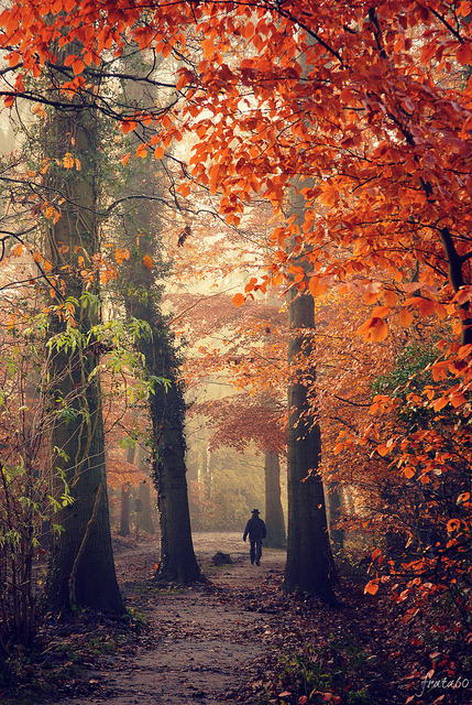 ethereo:  Autumn walk [explored] by frata60
