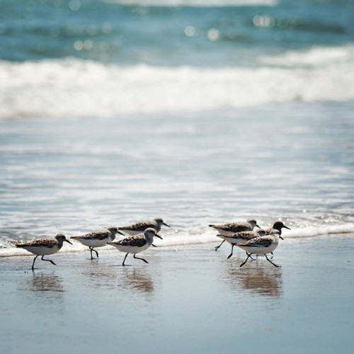 Birds on the beach!