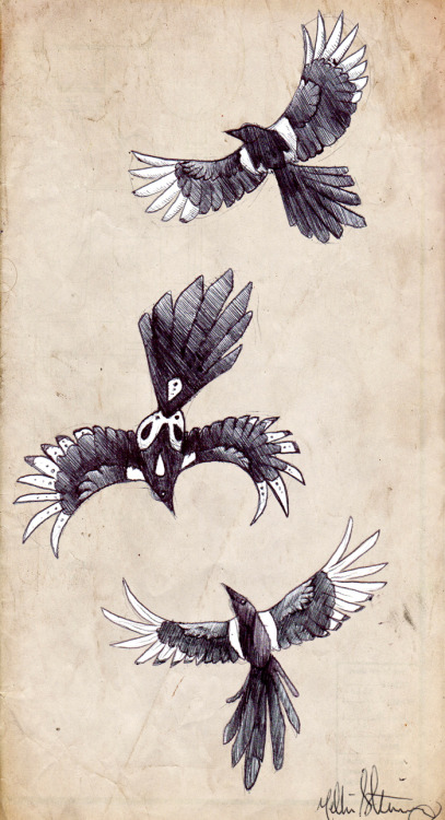 howlmoonshinehowl:  just some magpie sketches