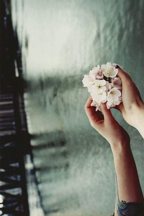living-flowers:  Tumblr no We Heart It. http://weheartit.com/entry/54794540
