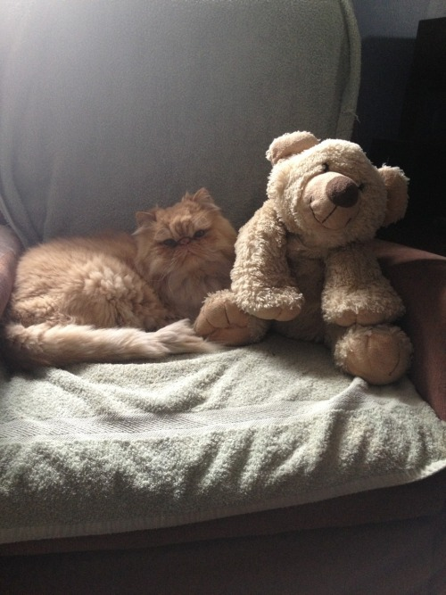 You know it's a Good Friday when you are snugged with your teddy bear!