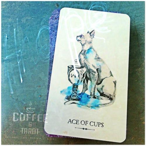tarot daily draw potter& 039;s dailies linestrider tarot ace of cups