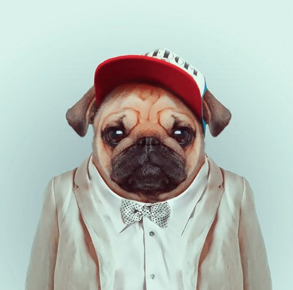 "theclassyissue:  ""Fashion Zoo Animals"" Photo Series by Yago Partal"