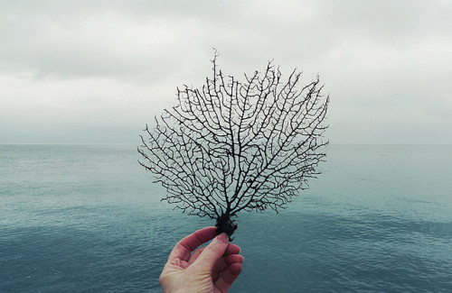 lonely-mountains:  see the sea fan by wild goose chase on Flickr.