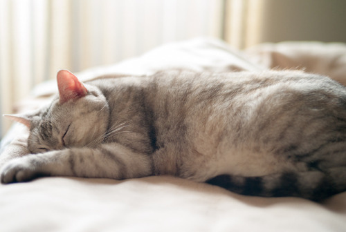 photogenicfelines:  (h329)