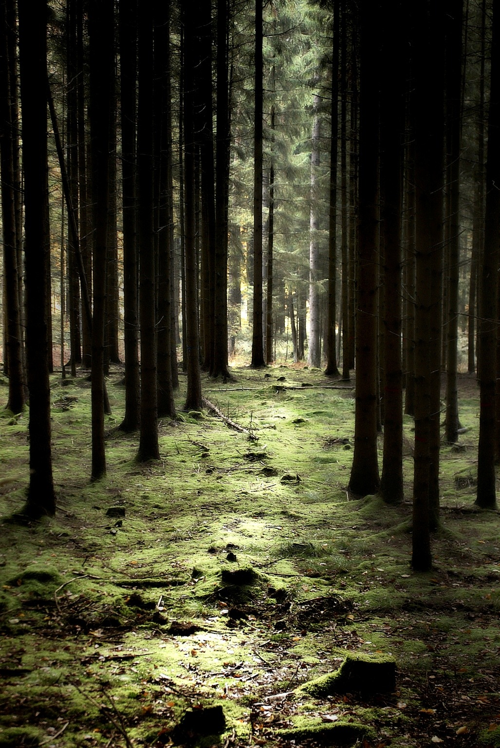 0rient-express:   Trees | by Jörg Marx.