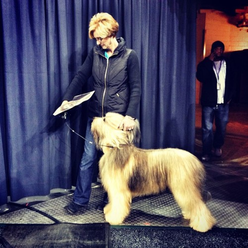 Backstage (Westminster Dog Show, NYC)
