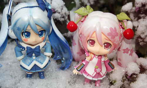 "playingwithshapes:  The Mikus battle for supremacy! ""Miss Snow Miku, didn't you see the calendar? It's my turn…""""Hmph! I'm not done yet!"""