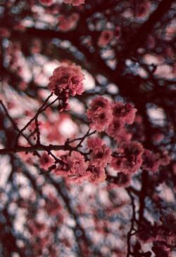 photo landscape portrait flower flowers nature vertical photografy