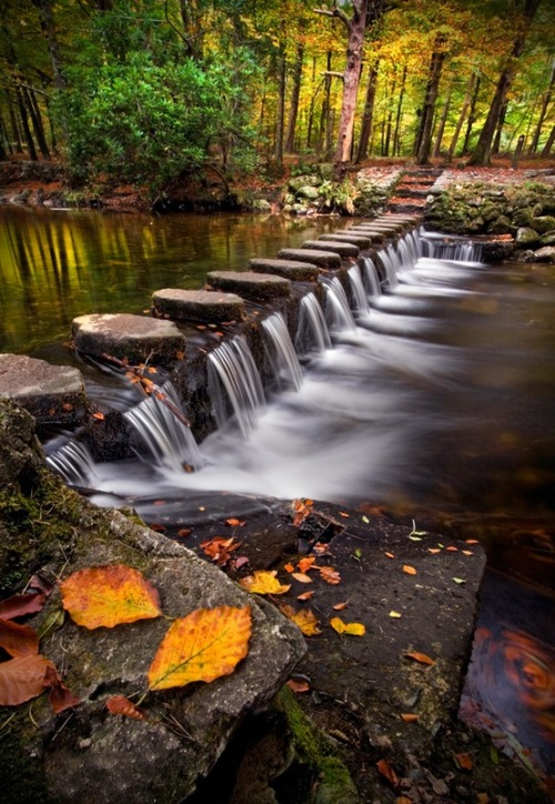 bluepueblo:  Stepping Stones, Shimna River, Tollymore Forest Park, Ireland photo via karen