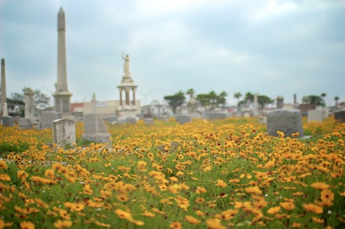 jetrosexual:  Galveston Island Cemetery… early morning