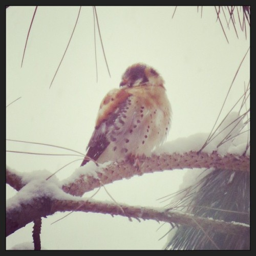 An interesting little bird outside my window in the snow.